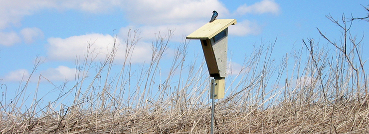 A bluebird takes advantage of a bluebird box near Prairie Crossing Charter School, a WRD Environmental project
