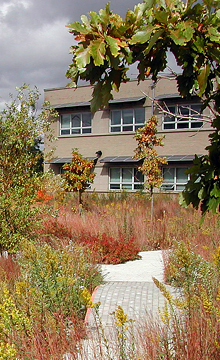 Wetland at the Chicago Center for Green Technology, a WRD Environmental project