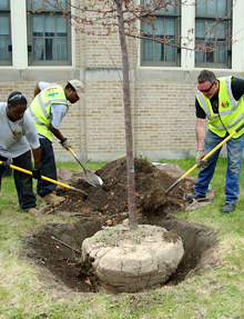 Greencorps Chicago trainees practicing their tree-planting skills