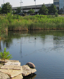 Ponds like this one at the Tellabs site now have improved water quality.
